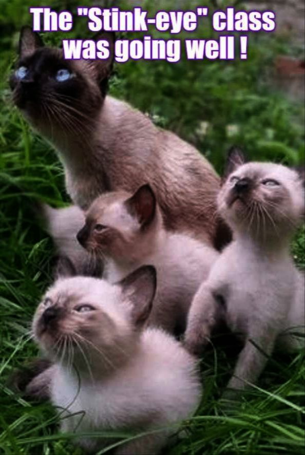Cute Animals Girl Names Cute Animals Kittens | famous faces