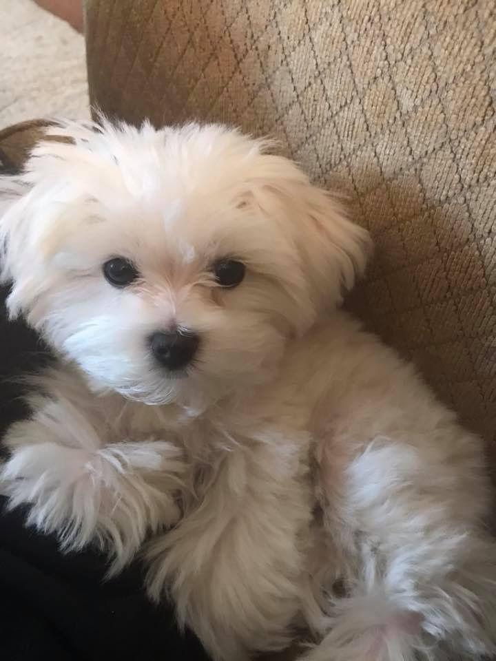 Looks Just Like My Little Dog Daisy Xaritwmena Zwa Zwa
