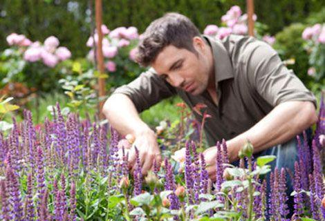 Stauden bereichern den Garten und geben ihm für eine lange Zeit die passende Note. Man unterscheidet eine Vielzahl verschiedener Arten, die sich hinsichtlich Blütezeiten, Blütenformen und –farben und Wuchsformen unterscheiden. Bei geschickter Planung Ihres Staudenbeetes können Sie das ganze Jahr über eine üppige Blütenpracht genießen. Soll dies gelingen, ist es sinnvoll, sich bereits vor dem Pflanzenkauf etwas zu informieren. Hier erfahren Sie, welche Staudenarten es gibt, wie diese perfekt…