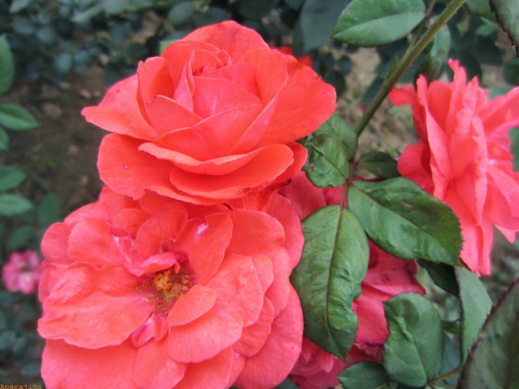 Telepathy : Happy Mother's Day