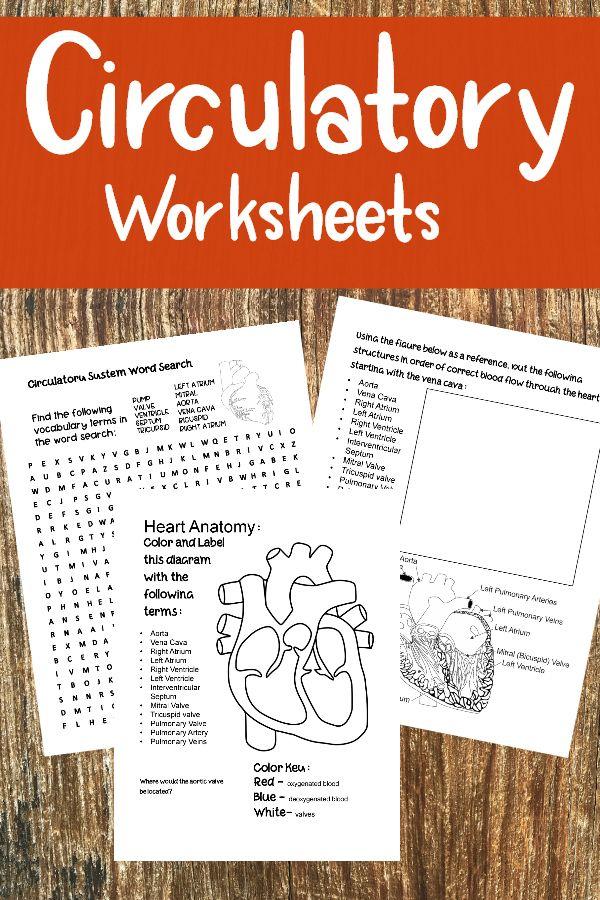 Ziemlich Anatomy And Physiology Vocabulary Words Galerie - Anatomie ...