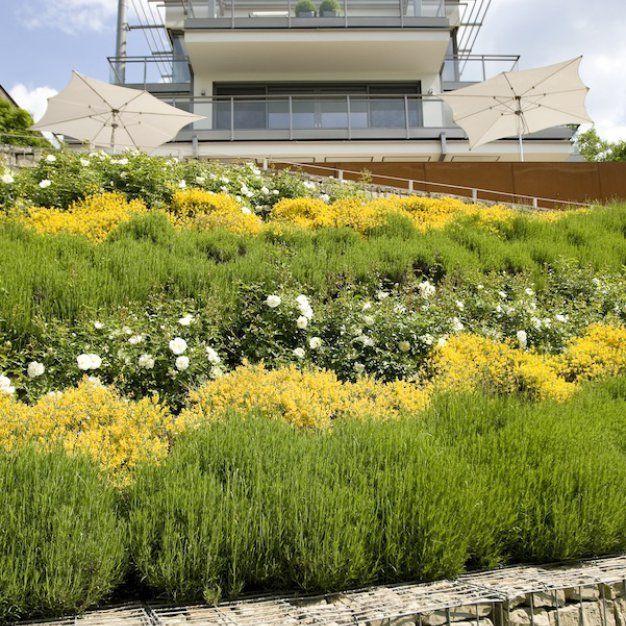 Steilgarten Mit Rheinblick In Dusseldorf Nord Leistungsbild Garten Privatgarten Gartengestaltung