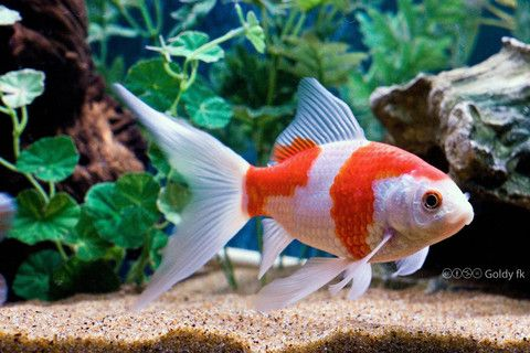Choose Aquarium Gallery Perth, when you have to buy freshwater tropical fish in…