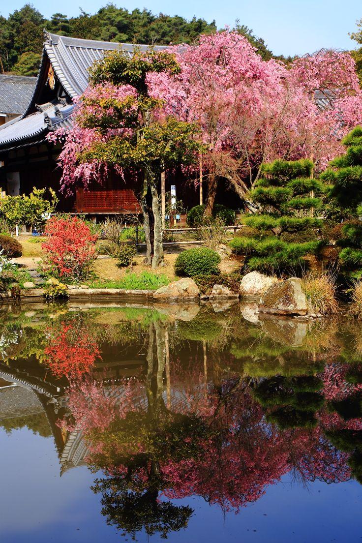 水鏡 桜 法金剛院
