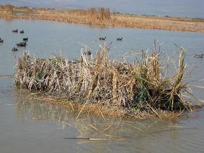 Duck Buddies Duck Blinds / Fiberglass Blind 9.JPG