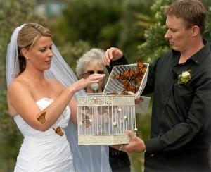 rachel clarks wedding release kuaotunu beach photographer lorna smith butterflies and release cage