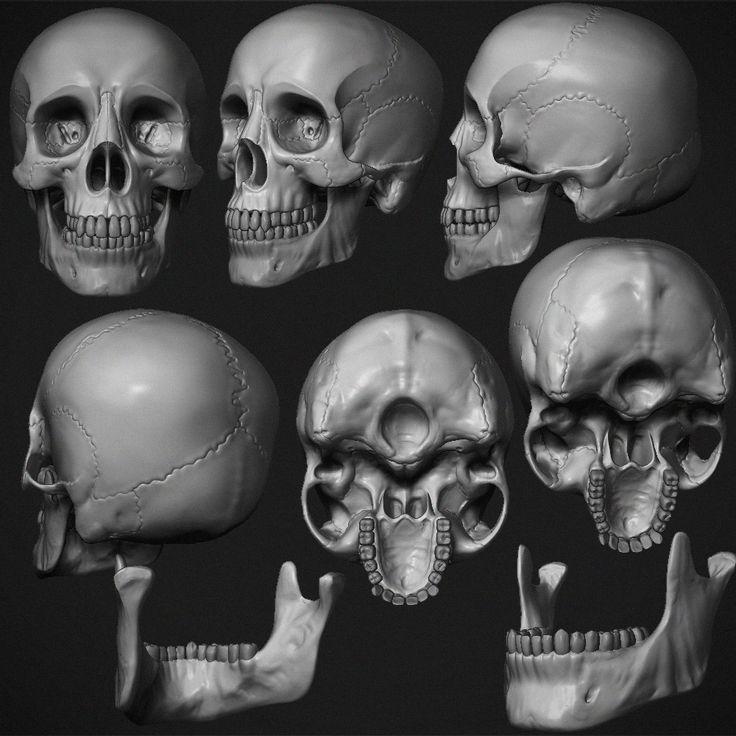 квашеная картинки черепа со всех сторон для кого секрет