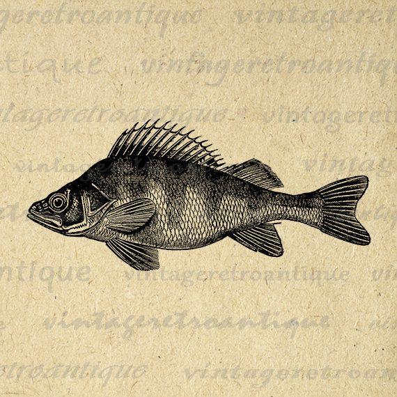 Printable Perch Fish Graphic Digital Download Fish Illustration Image Vintage Clip Art Jpg Png Eps 18x18 HQ 300dpi No.2723 @ vintageretroantique.etsy.com