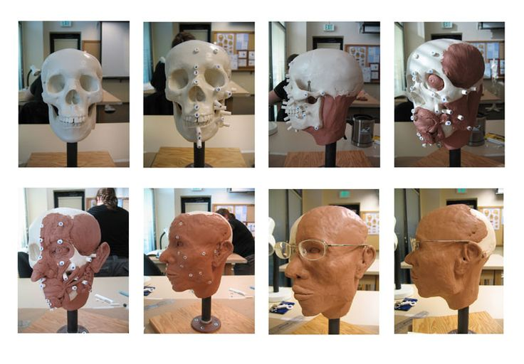 Forensic facial reconstruction...dream job. I've done this, it is challenging