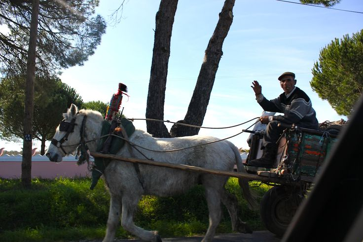 A Portugese man takes his horse and cart through the Algarve countryside.  www.traveladept.com