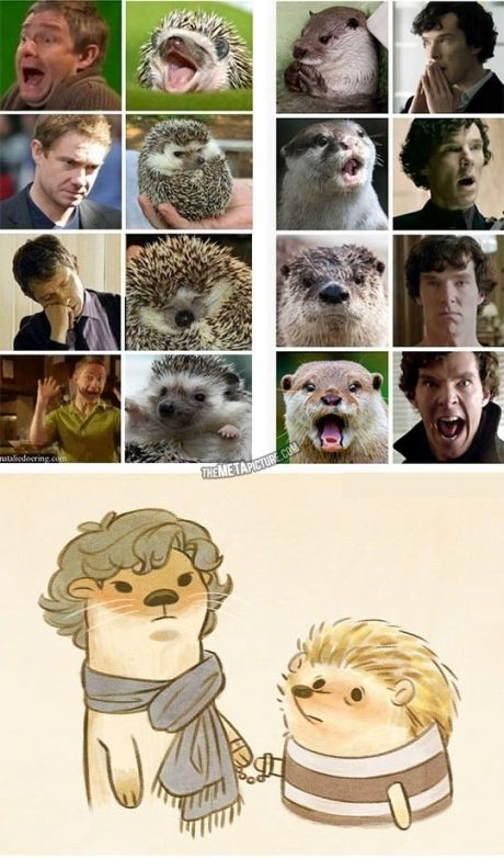 Otters who looks like Benedict Cumberbatch.  Hedgehogs who look like Martin Freeman.  #Sherlock