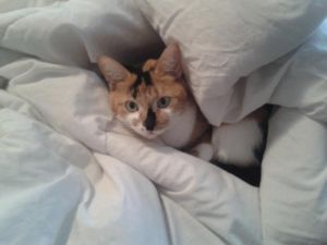 Blvd W Watch | Share | Print | Report Ad    View larger image   Date Listed 11-Jul-13 Price Please contact Address 734 Heritage Boulevard West, Lethbridge, AB T1K 7E7, Canada  View map Lost my baby girl, a calico cat named Tigra. Please call 894-3788 if you see her. Thank you