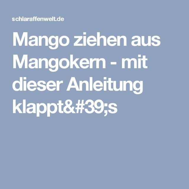 Elegant Mango ziehen aus Mangokern mit dieser Anleitung klappt us