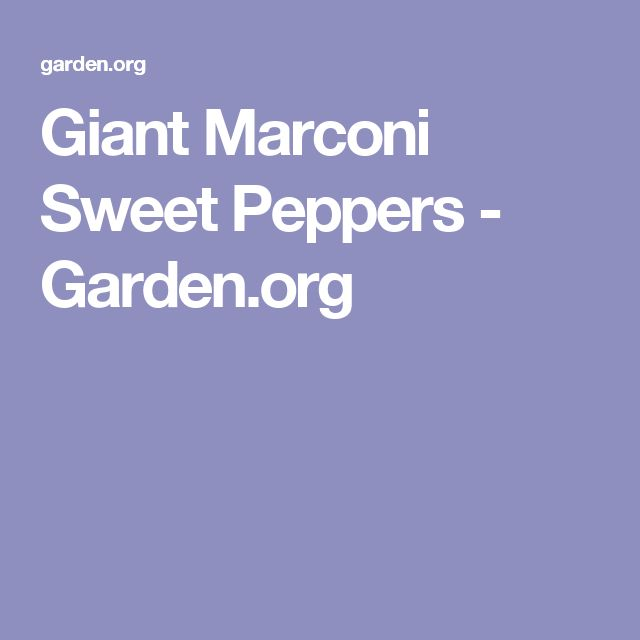 Giant Marconi Sweet Peppers - Garden.org