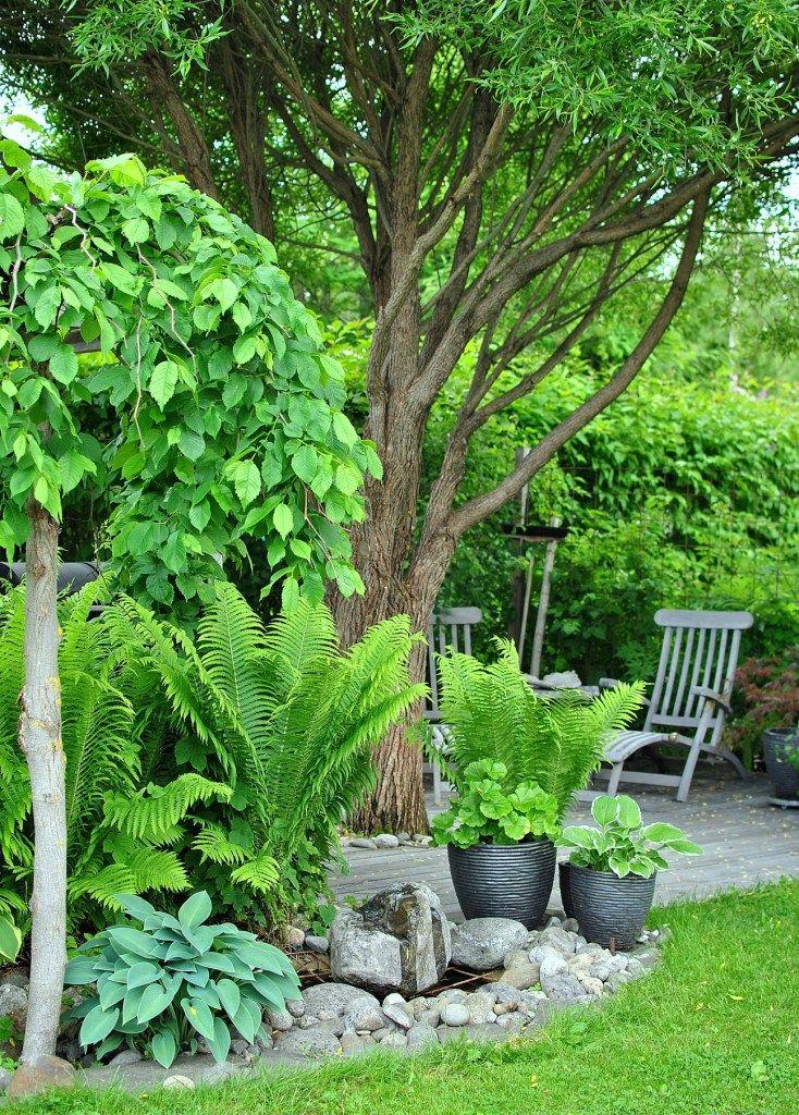 Schöner Mix aus Schattenpflanzen wie Farn und Hostas für dunkle Ecken im Garten