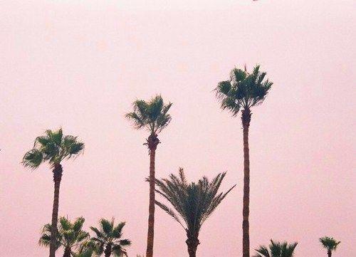 palmier vert ciel rose