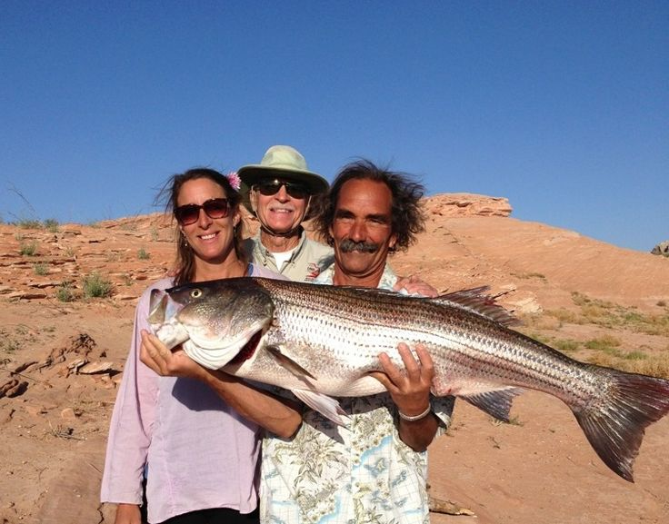58 best striper striper striper images on pinterest for Lake powell fishing license