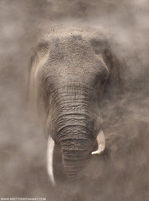 Elefant, Nebel