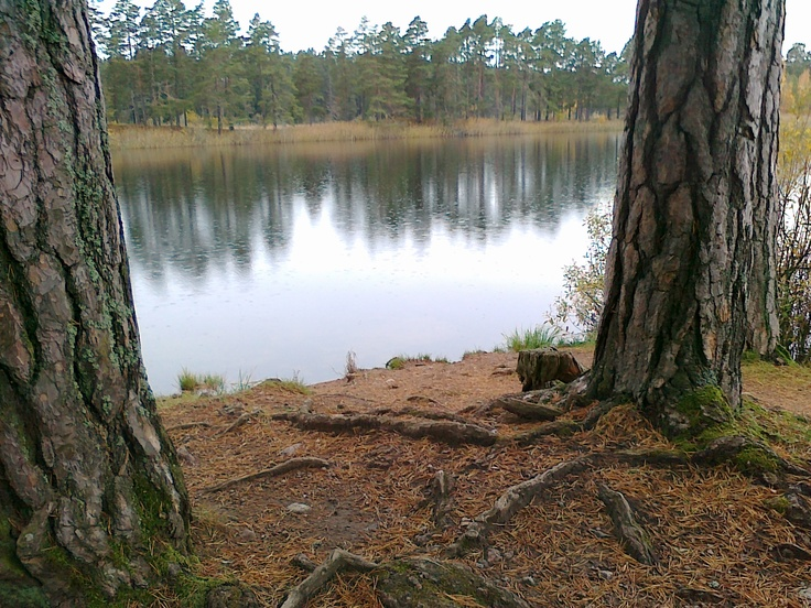 Skogssjön, Mjölby
