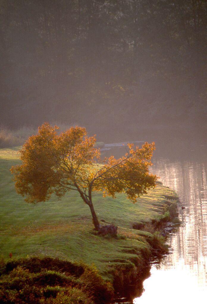 Dropbox - River Tree 4x6.jpg