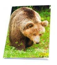 Bear Tasoula. Notebook featuring the bears which are hosted in ARCTUROS' Brown Bear Sanctuary.
