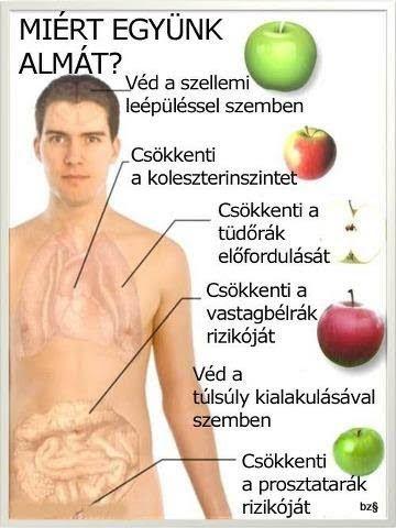 Egészség - 102471664246693055506 - Picasa Webalbumok