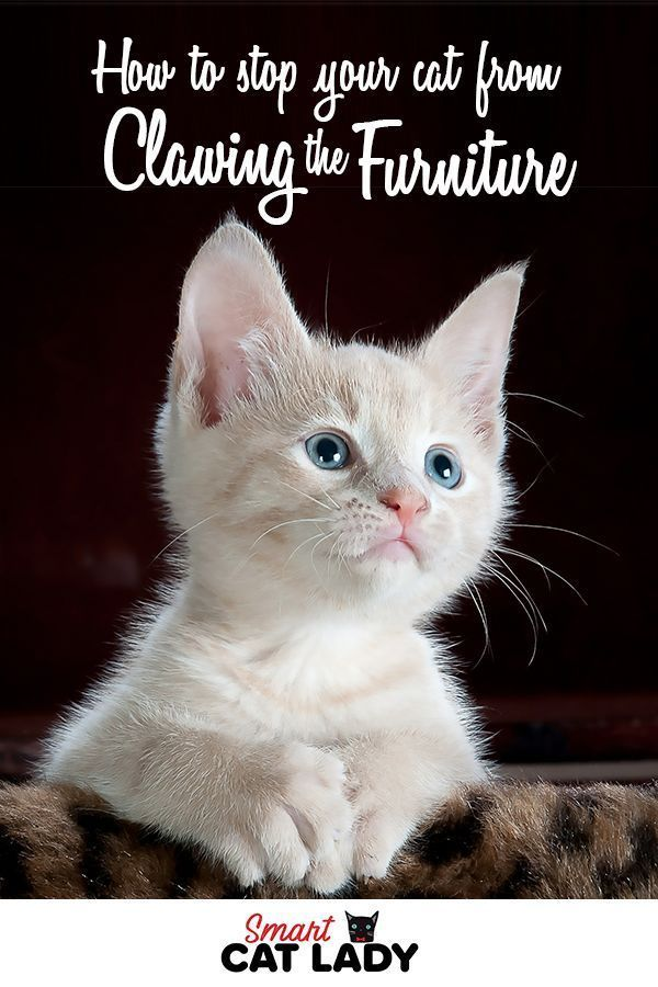 How To Stop Your Cat From Clawing From Furniture Cat Care Cat Illnesses Cats