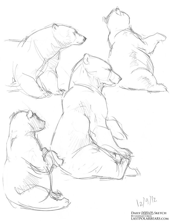 proportions of bear drawing - Google Search