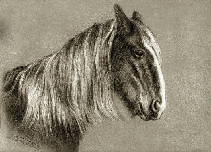 """""""Clydesdale in retirement"""". Pastel on paper. By Sara Cuthbert."""