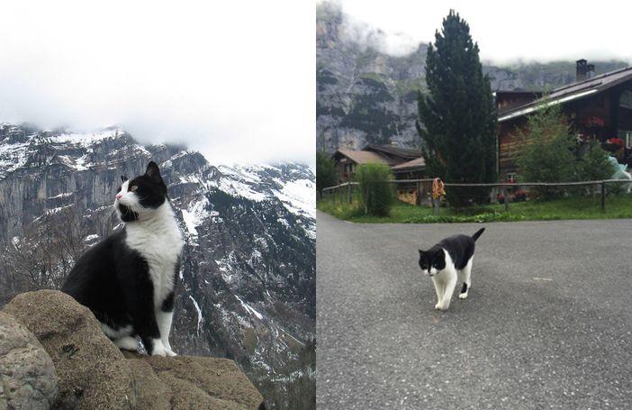 Held! Deze kat leidt regelmatig verdwaalde wandelaars terug naar de bewoonde…