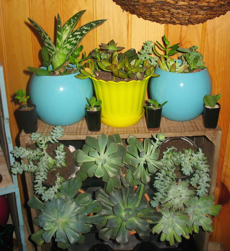 Indoor succulent garden succulents n such pinterest gardens succulents garden and indoor - Best indoor succulents ...