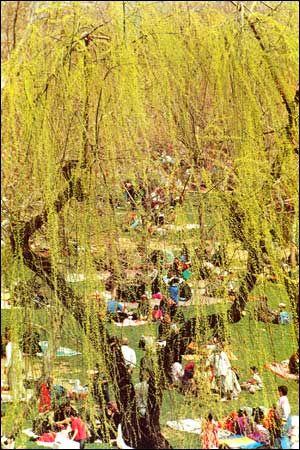 Sizdah Bedar - Culture of Iran: No-Rooz, The Iranian New Year at Present Times