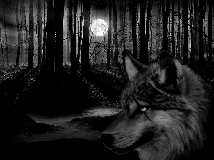 dark forest | wolf forest hd pictures hi friends are you ...