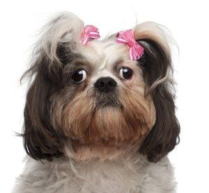 What Can I Give My Dog For Anxiety During Grooming