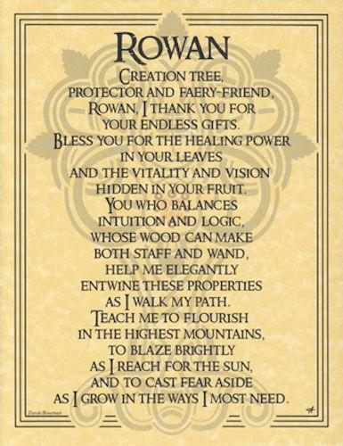 Détails sur Rowan Tree Parchment Page pour Livre des ombres, autel   – names