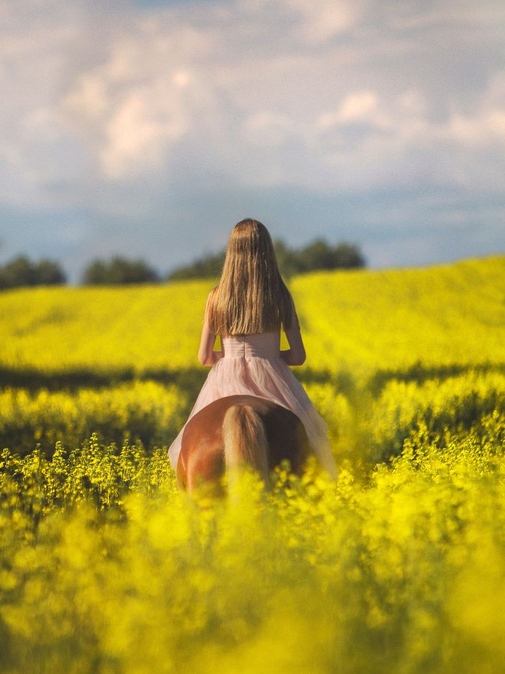 The rider of the golden fields - Fields of gold.