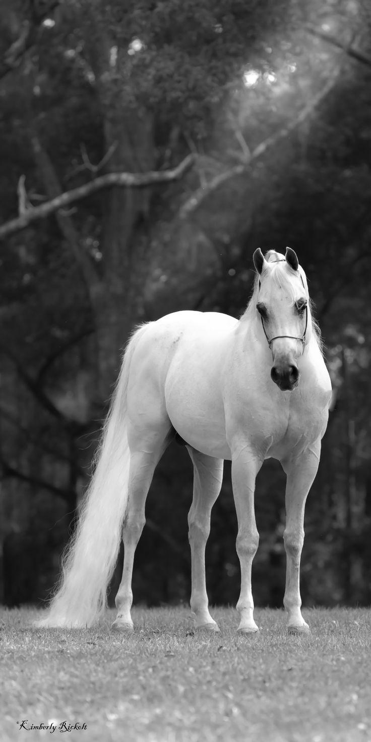 Arabian horse - title Elegance - by kimrickolt on 500px
