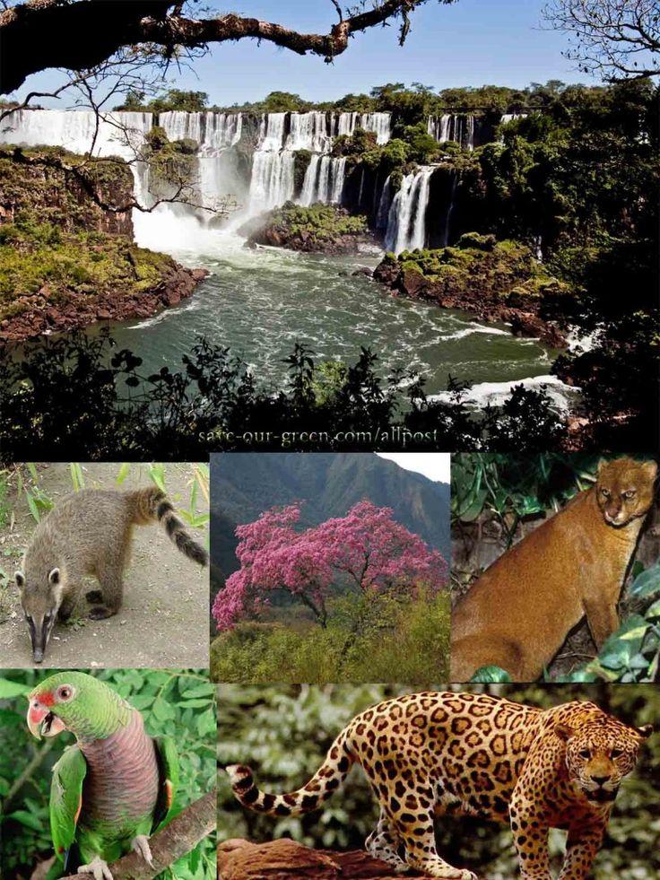 Iguazu National Park Argentina.   ~lbk~