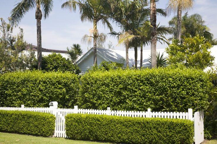 clôture de jardin pas cher diy haie végétale