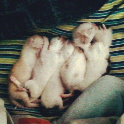 #gatitos #recién #nacidos #cat #kitten #cute #adopt #rescue #rescued #justborn #aaww #friendforlife #friendship