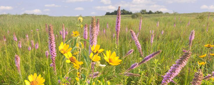 mother nature's garden in the prairie