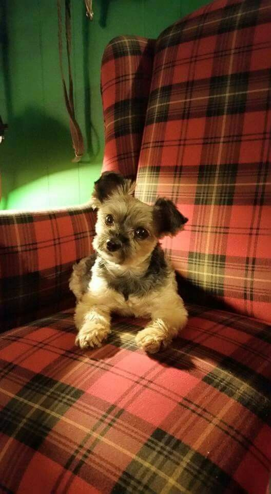 plaid AND a puppy. what's not to love?