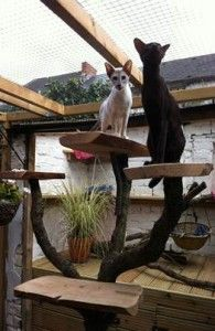 Have an outdoor cat run? See tips for creating cat furniture for your outdoor cat runs. http://www.siamese-cat-breeder.co.uk/outdoor-cat-run-furniture/