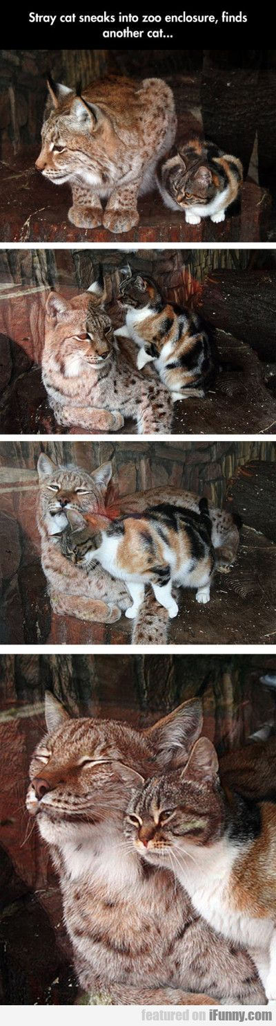 Stray Cat Sneaks Into Zoo Enclosure