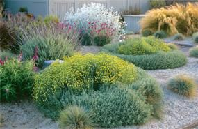 Drought Tolerant Plants Collection | Sun Loving Plants and Flowers | Bloom IQ