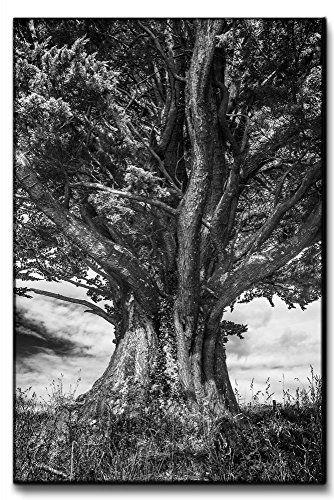 "Leinwandbild XXL ""gewaltiger Baum Monochrom"" echter Kunstdruck 120x80 - 90x60 - 60x40cm Größe 80x120cm"