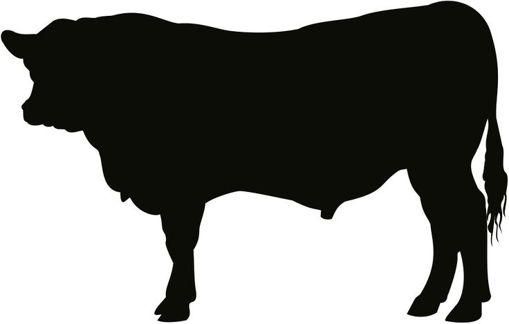 Free photo: Angus, Bull, Cattle, Cow, Art - Free Image on Pixabay ...
