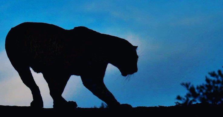 Want to come on a #SABig5 safari? Here's some inspiration #inyatisafari