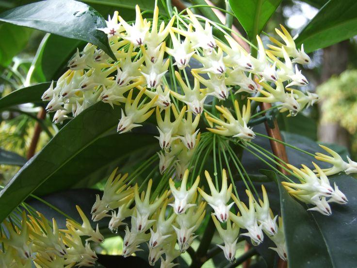 White Flowering House Plants 167 best flowering houseplants images on pinterest | gardening