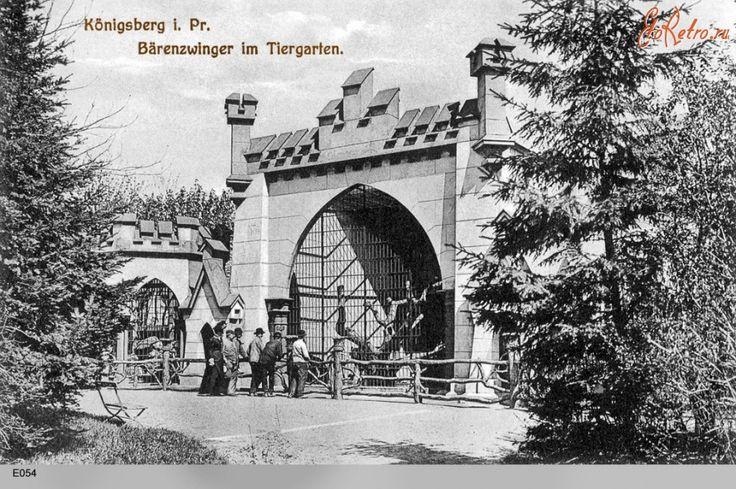Кёнигсбергский зоопарк. 1908 год. Кенигсбергский зоопарк ежегодно выставлял для обозрения богатую живую коллекцию. Особенно больших успехов его специалисты добились в 1923 году – получили приплод кондора. В начале тридцатых годов здесь хорошо размножались тигры, леопарды, зебры, лоси, эму, пингвины, морские львы; содержались слон, бегемот, носороги, большие антилопы, орангутаны, шимпанзе.